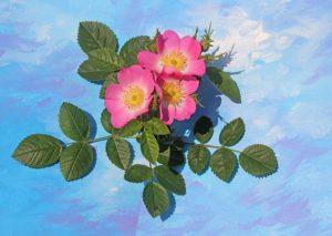 flowers-2274241_640