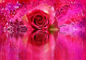 rose-2073860_640